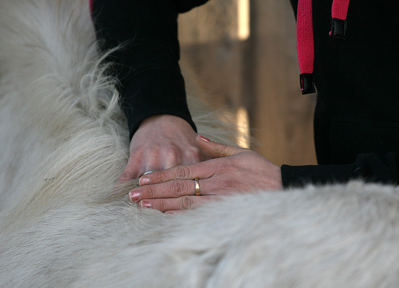 Breuss-Massage Pferd Radagais 01