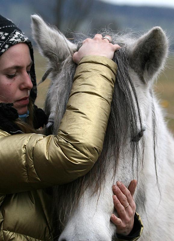 Cranio-Sacral-Therapie Pferd Radagais 02