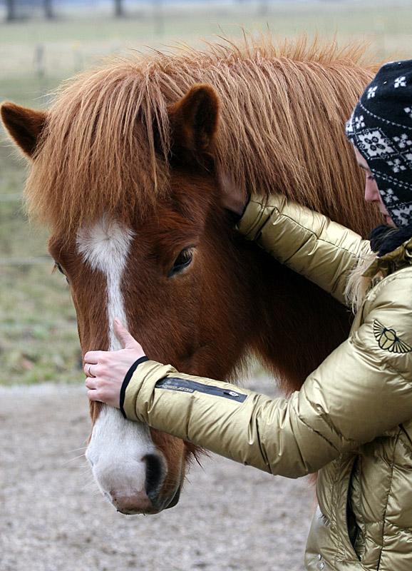 Dorntherapie Pferd Radagais 02