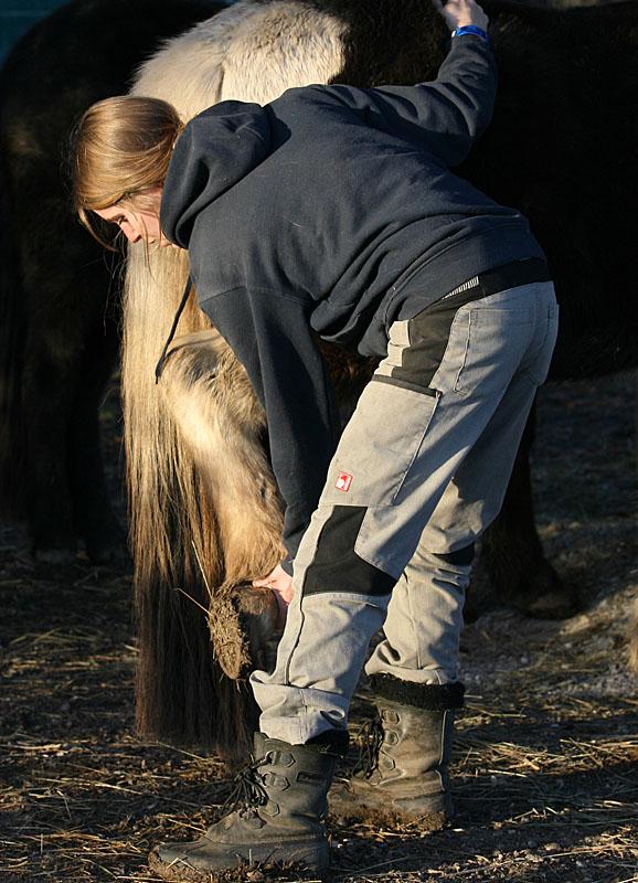 Dorntherapie Pferd Radagais 04
